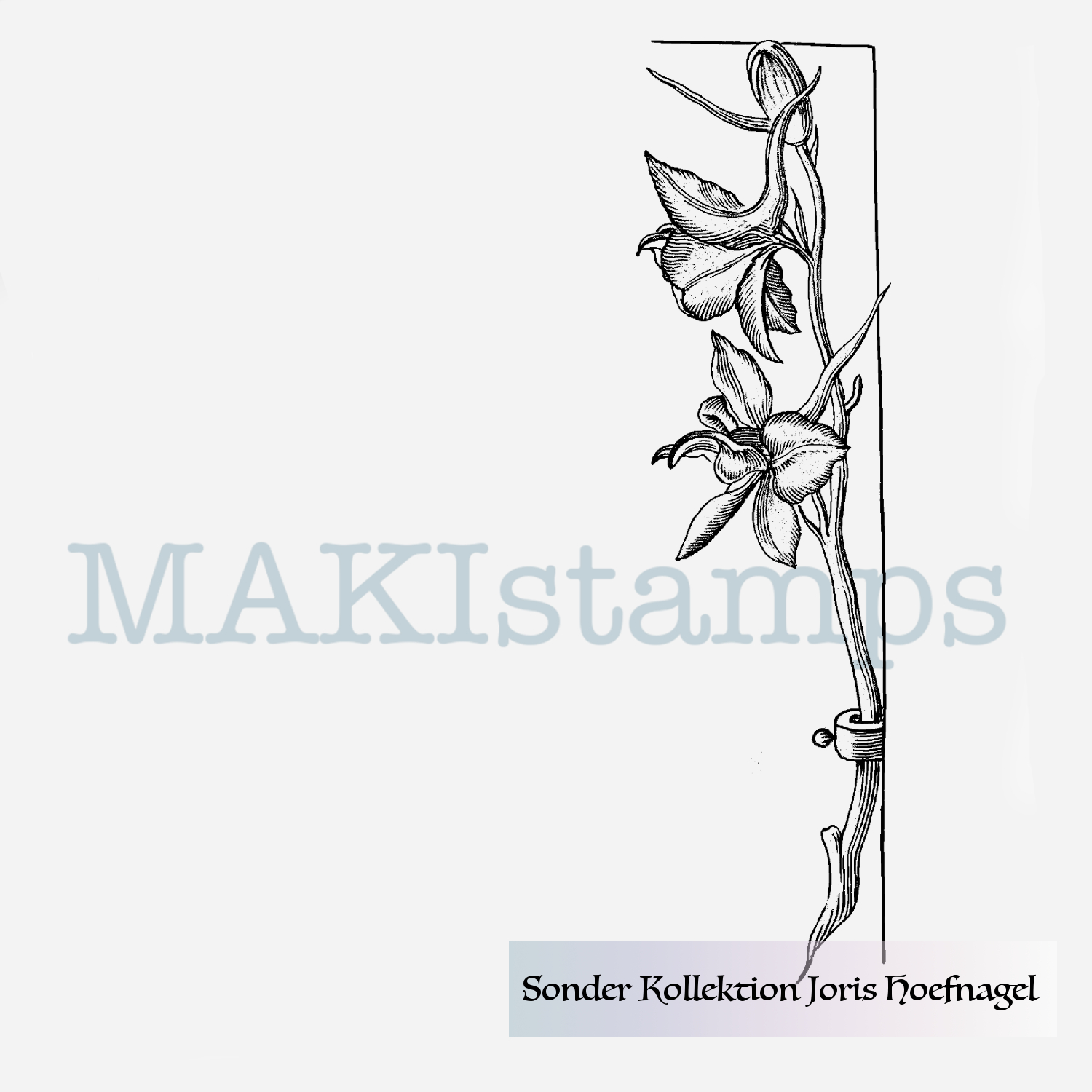 unmounted rubber or cling stamp option Purple Iris flower rubber art stamp Joris Hoefnagel SPECIAL COLLECTION 190405