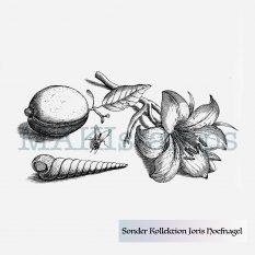Georg Hoefnagel Stempel Stillleben mit Lilie MAKIstamps Sonder Kollektion 2019