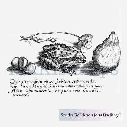 Rubber stamp frog Joris Hoefnagel MAKIstamps special edition